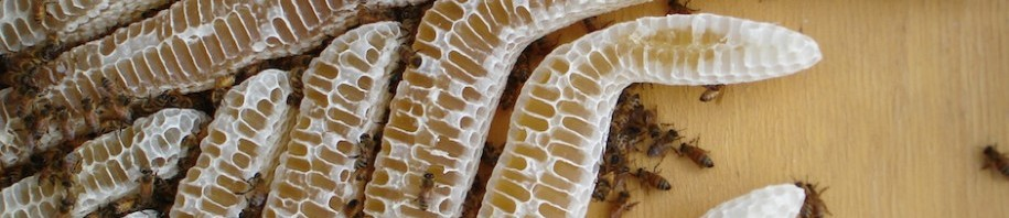 Natural Honeycomb